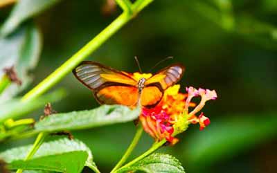 Шаманский кемп Фанагория бабочка