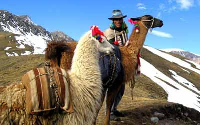 Ламы в горах