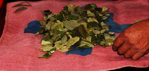 Чтение по листьям коки Куско