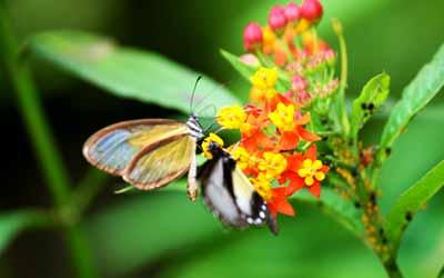 Шаманский кемп в Белорусии бабочка