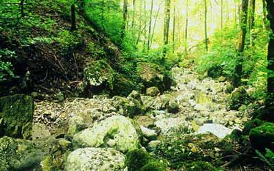 Кемп в Белоруссии лес