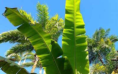 Эквадор лес